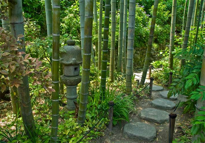 Der Bamboo Garden In Der Japanischen Stadt Kamakura Im Hasedera Tempel Mit  Bambuspflanzen An
