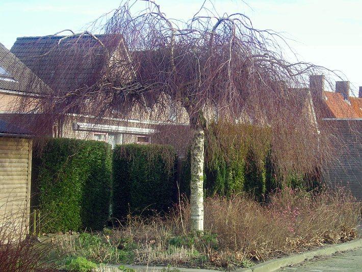 zierbäume - der zierbaum, Garten Ideen