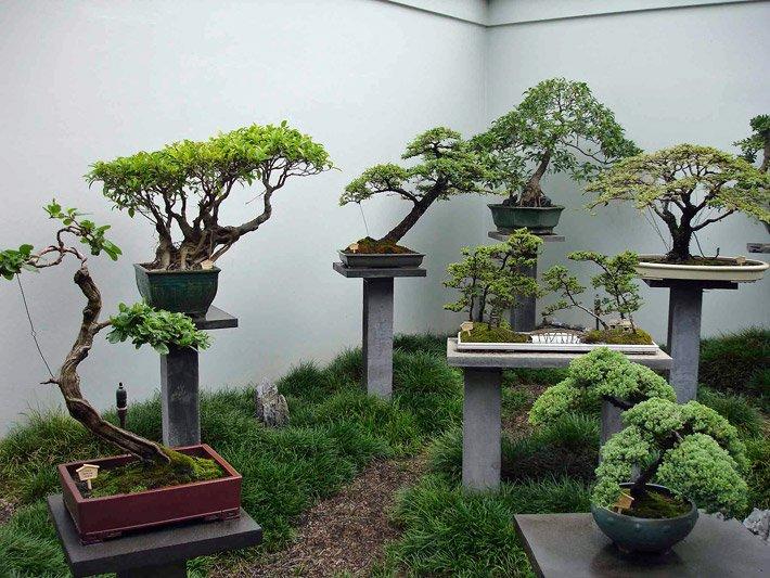 topfpflanzen die topfpflanze. Black Bedroom Furniture Sets. Home Design Ideas