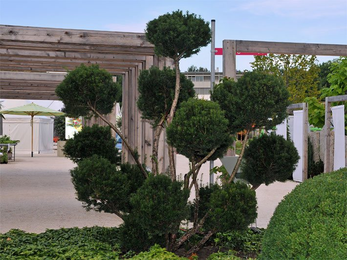 Nadelb ume nadelbaum lexikon nadelbaumarten for Spezielle zimmerpflanzen