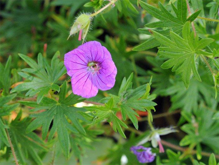 Frühlingsblumen Frühjahrsblumen