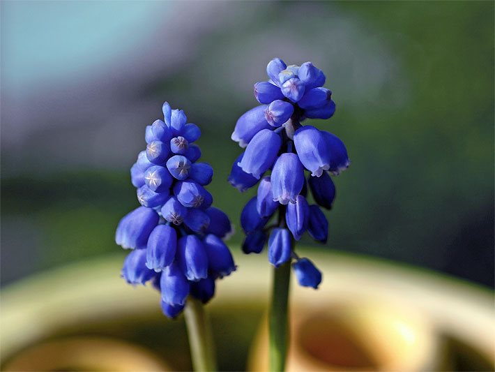 zwiebelblumen (blumenzwiebeln), Garten ideen gestaltung