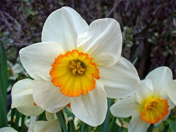 Schnittblumen - Die Schnittblume