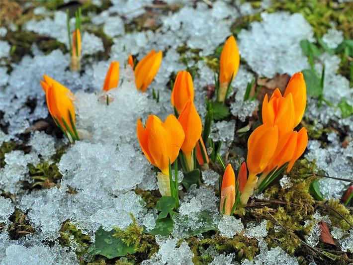 Winterblumen - Die Winterblume