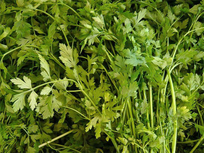 salatkr uter das salatkraut salatgew rze. Black Bedroom Furniture Sets. Home Design Ideas