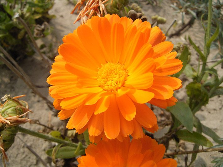 Blumenlexikon und Blumenkatalog