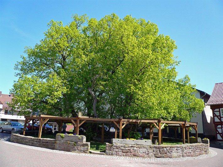 Bäume Baumlexikon Mit Baumarten