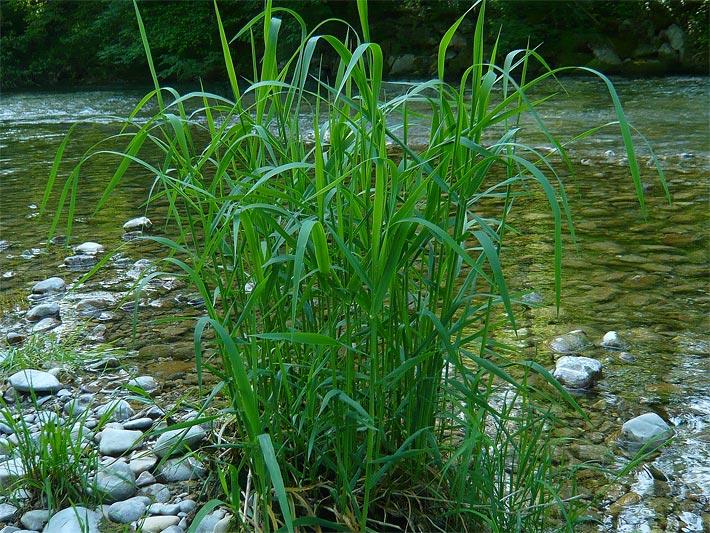 Gräser Für Garten gräser grasarten
