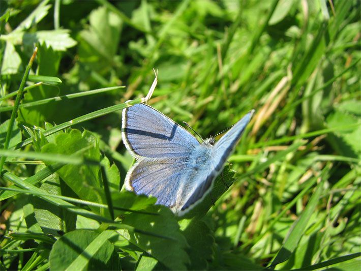 Tipps: Schmetterlingsgarten Anlegen | Schmetterlingsparks Und ... Blumen Schmetterlinge Im Garten