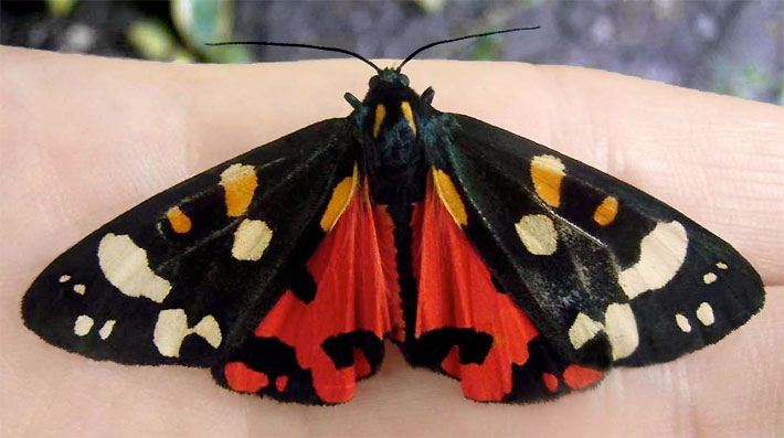 Tipps Schmetterlingsgarten Anlegen Schmetterlingsparks