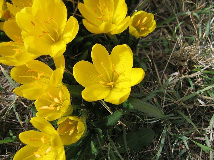 gelbe gartenblumen bestimmen – msglocal, Gartenarbeit ideen
