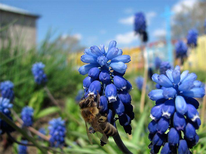 frühlingsblumen - frühjahrsblumen, Gartengestaltung