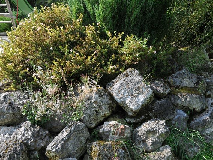 Gartendesign Mit Trockenmauer Und Pflanzen